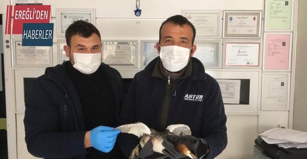 Yaralı bulunan bahri kuşu tedaviye alındı