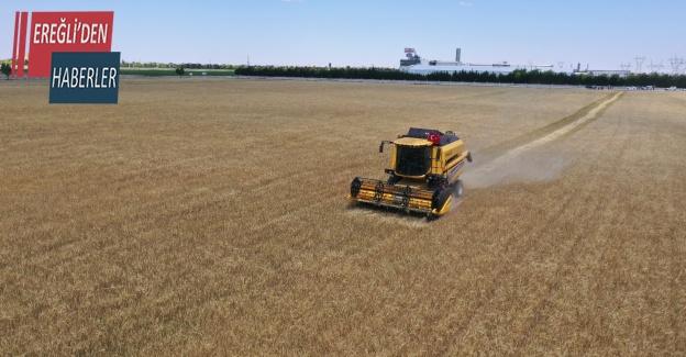 Konya'da atıl araziler ekilip hasadı yapıldı, geliri vatandaşa aktarılacak