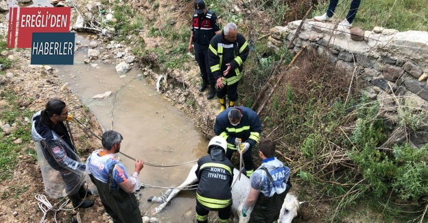 Konya'da itfaiyeden at kurtarma operasyonu