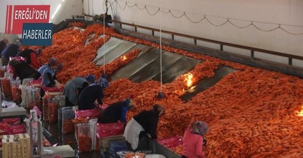 Konya'da üretilen havuçlar dünya pazarlarına gönderiliyor