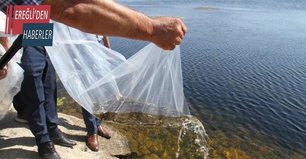 Konya'da 21 göl ve gölete 1 milyon 8 bin yavru sazan balığı bırakıldı