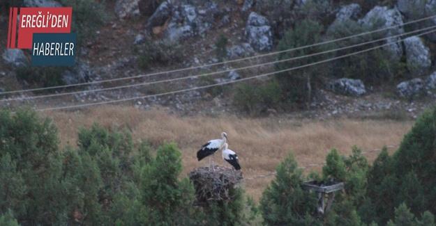 Konya'da leyleklerin göç yolculuğu başladı