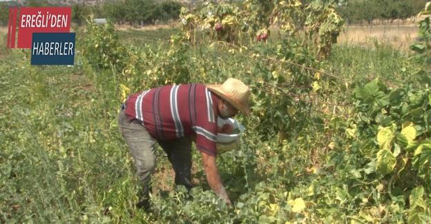 40 yıl gelmediği köyüne evini ve bahçesini kurarak geri dönüş yaptı