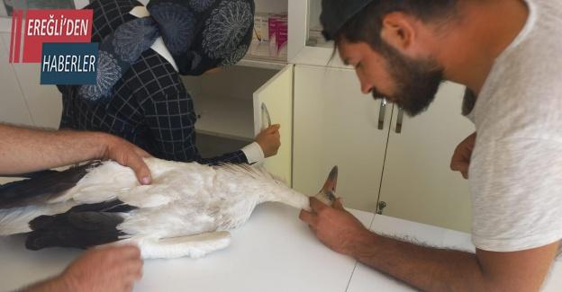 Konya'da yaralı bulunan leylek tedavi altına alındı