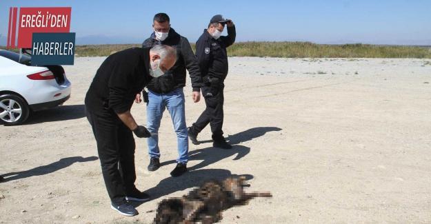 Sosyal medyada yakıldığı iddia edilen köpeğe araba çarpmış