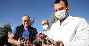 Hastane bahçesinde doğan 11 yavru köpek ve annesi sağlıkçılara emanet