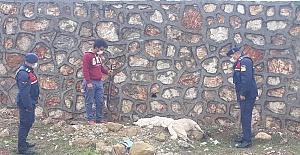 Sokak köpeklerini öldüren kişi yakalandı