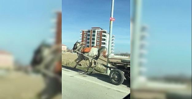 Konyada başıboş at trafikte tehlike...