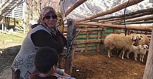 Konyada şehit annesinin koyunları...
