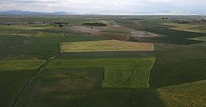 Hüyük'te 408 bin dekar ekili saha kuraklıktan zarar gördü